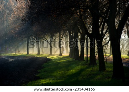 A person walking a dog on a sun ray lit park path along the beautiful avenue of trees while the sun rays can be clearly seen through the misty fog.