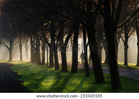 A person walking a dog through a foggy sun ray lit park path. The path is surrounded by a beautiful avenue of trees. - stock photo