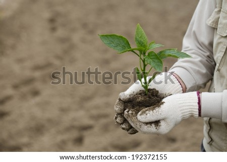 A person with gloves holding a young plant. - stock photo