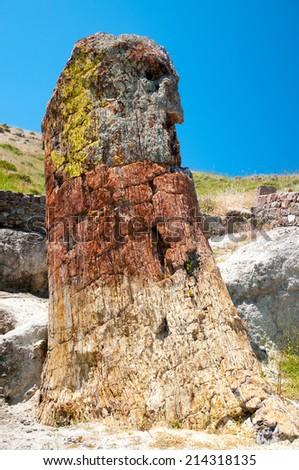 A Petrified Tree on the Island of Lesvos,Greece. - stock photo