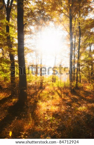 A photo a Autumn forest and sun - stock photo
