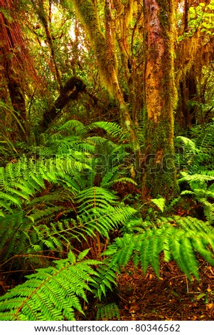 A photo a Rainforest  in New Zealand - stock photo