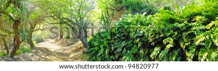 A photo dry wilderness - inside the crater of Koko Head,  Oahu, Hawaii - stock photo