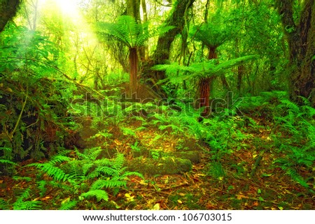 A photo from the rain forest - stock photo