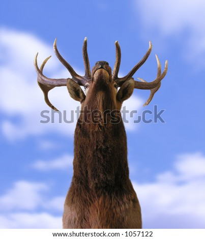 A photo of a buck from underneath - stock photo