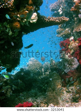A photo of a coral reef - stock photo