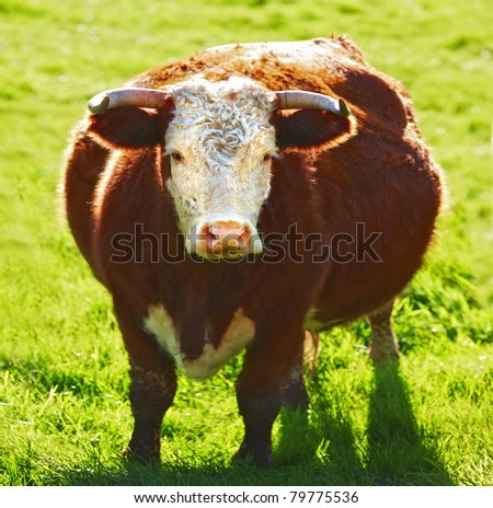 A photo of a cow - stock photo