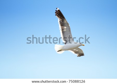 A photo of a flying seagull and blue sky - stock photo