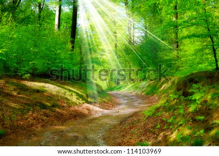 A photo of a forest road - stock photo