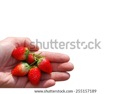 A photo of a hand holding five strawberries.  - stock photo