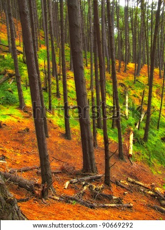 A photo of a Pine forest at mountain side, New Zealand - stock photo