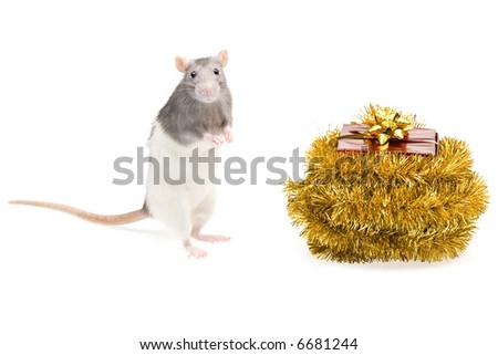 A photo of a rat and a gift box, isolated