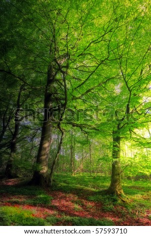 A photo of a saturated, lush forest in Denmark