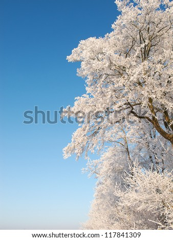 A photo of a tree covered with snow - stock photo