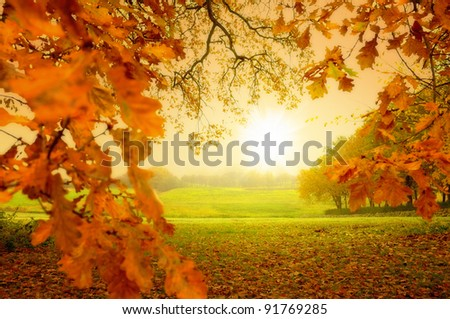 A  photo of Autumn forest and sun - stock photo