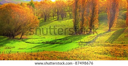 A photo of Autumn forest and sunlight - stock photo
