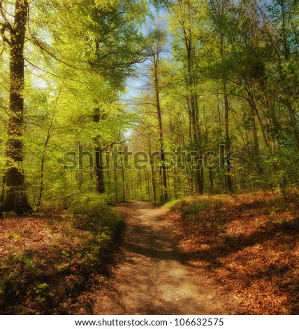 A photo of autumn leaves and trees - stock photo