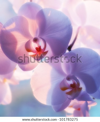 A photo of Beautiful Orchids - stock photo