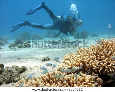 A photo of Branch coral with a diver in the background. - stock photo
