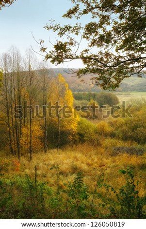 A photo of forest swamp in autumn - Denmark - stock photo