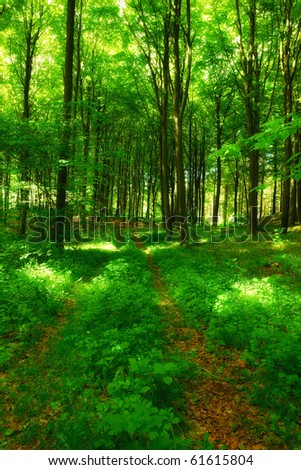 A photo of green and lush forest