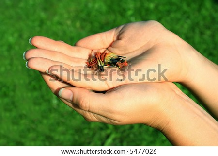 A photo of hands holding flower seeds - stock photo