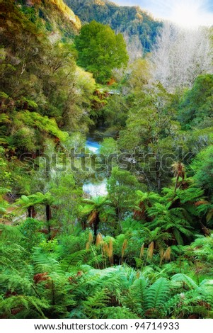A photo of Hawaiian rain forest - stock photo