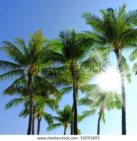 A photo of palms a tropical morning with blue sky - stock photo