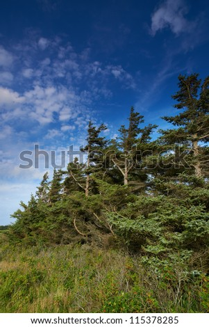 a photo of pine forest in fall - stock photo