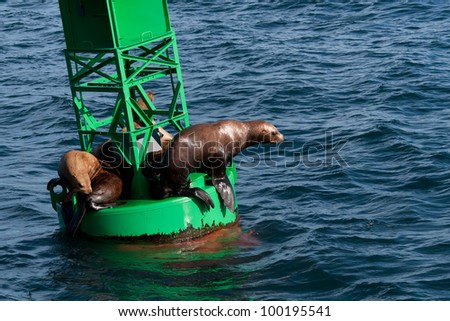 A photo of several Stellar Sea Lions resting on a buoy in Prince William Sound off the coast of Alaska. - stock photo
