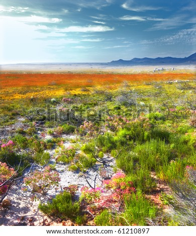 a photo of South African wilderness - stock photo