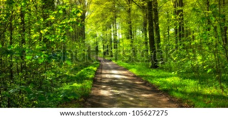 A photo of springtime in the forest - stock photo