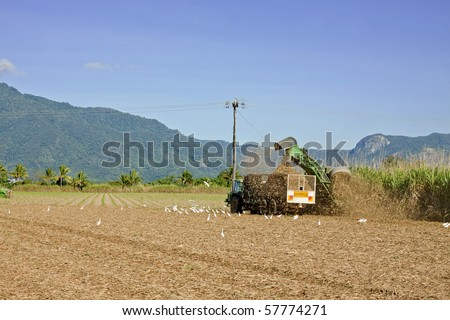 A photo of sugar cane harvest in Tropical Queensland, Australia - stock photo