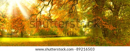 A  photo of Sunrise in autumn forest - stock photo