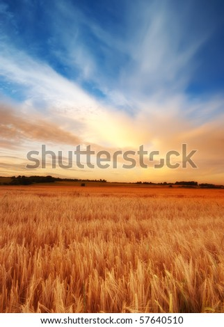 A  photo of sunset in the countryside at summertime - stock photo