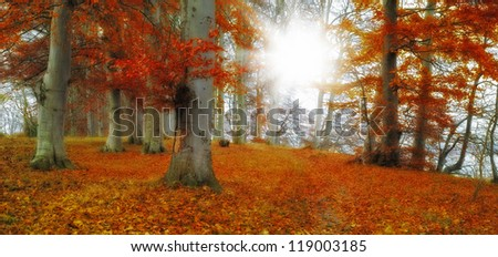 A photo of sunshine and forest in autumn - stock photo
