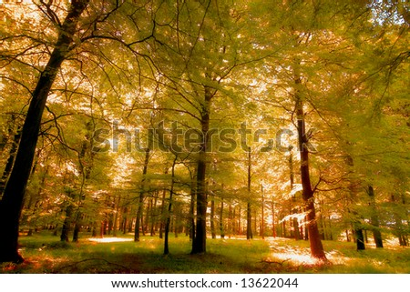 A photo of the beautiful forest in autumn - stock photo
