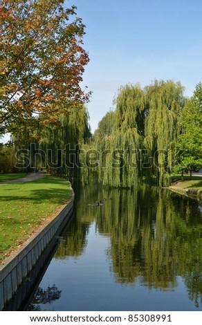 A photo of the embankment willows - stock photo