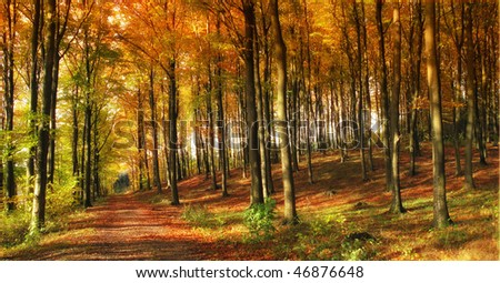 A photo of the forest dressed in the colors of autumn - stock photo
