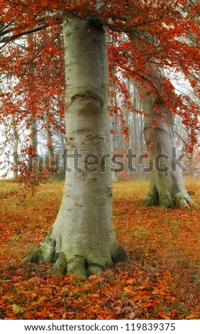 A photo of the forest in autumn colors - stock photo