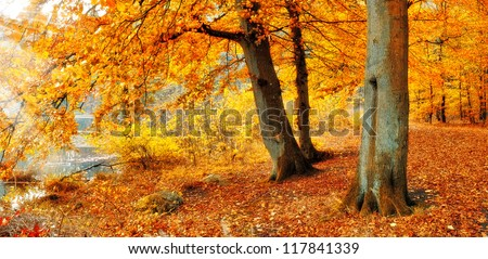 A photo of the forest in the colors of autumn - stock photo