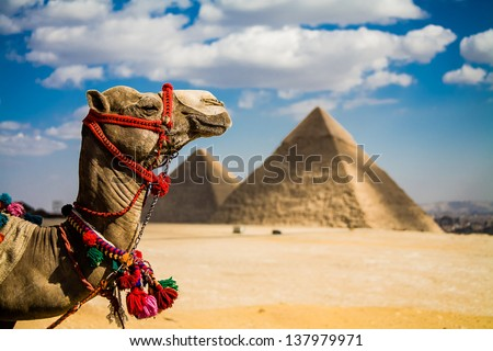 A photo of the Giza Pyramids outside of Cairo, Egypt.  An iconic image of ancient times and places.  Title: Camel of Giza - stock photo