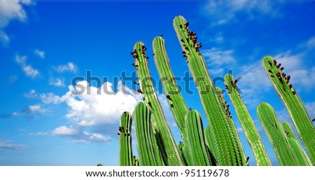 A photo of The Organ Pipe Cactus