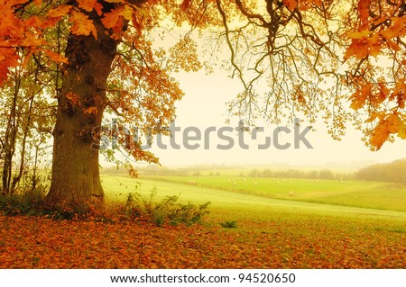A photo of trees an autumn morning - stock photo