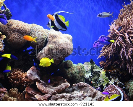 A photo of tropical fish in an aquarium - stock photo