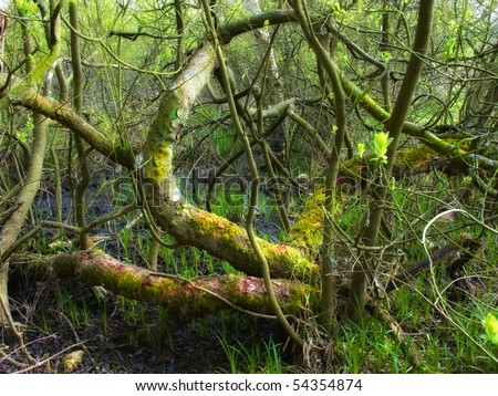 A photo of wild and dark sump forest wilderness - stock photo