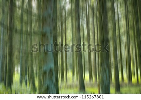 a photo sunset in dark pine forest in fall - stock photo