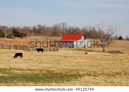 A photograph of a barn and cows in a Oklahoma field. - stock photo