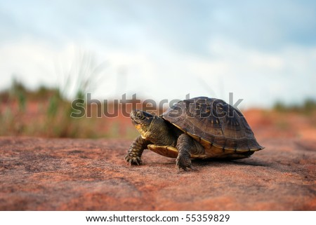 A photograph of a turtle resting on a sand rock ground.