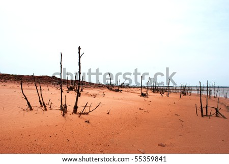 A photograph of dead trees on a sandy beach shoreline. - stock photo